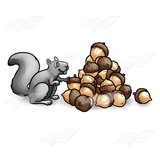Gray Squirrel with Nuts