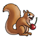 Brown Squirrel with a cherry
