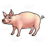 Standing Pig