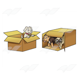 Boxes of Puppies