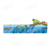 Swimming Frogs Scene