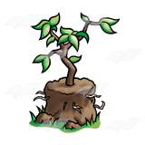 Tree for Planting