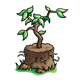 Tree for Planting with dirt