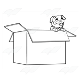 Pug Puppy in Box