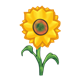 Yellow Sunflower with stem and leaves