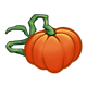 Orange Pumpkin with long vine