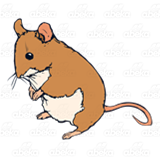 Adult Mouse