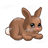 Small Brown Bunny