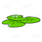 Lily Pad Cluster