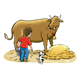 Milking a Cow cow, boy, hay, dog, pail