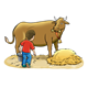 Milking a Cow cow, boy, hay, pail