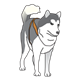 Dog Sled Team gray dog standing