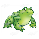 Green Spotted Frog