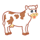 White Cow with brown spots