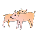 Two Pigs standing