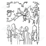 Zacchaeus in a Tree