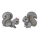 Gray Squirrels two, face-to-face