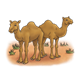 Two Brown Camels standing in the desert