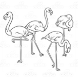 Four Pink Flamingoes