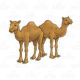 Two Brown Camels