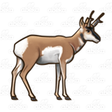 Brown Antelope