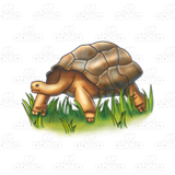 Giant Brown Tortoise