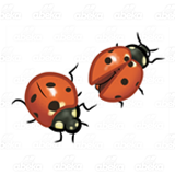 Two Orange Ladybugs