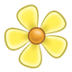 Yellow Flower with five petals and yellow center
