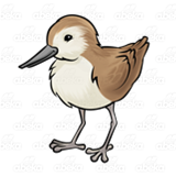 Brown Sandpiper