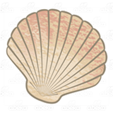 Cream Scalloped Shell