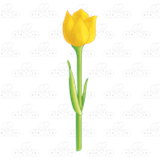 Open Yellow Tulip