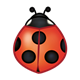 Red Ladybug with five spots