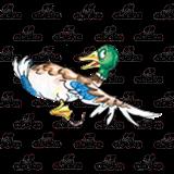Abeka   Clip Art   Mallard Duck—looking behind while flying