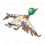 Abeka   Clip Art   Mallard Duck—with flapping wings