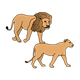 Two Lions walking