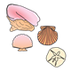 Collection of Seashells four