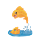 Two Orange Fish one jumping out of the water