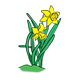 Two Yellow Daffodils 2