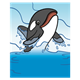 Killer Whale with water background